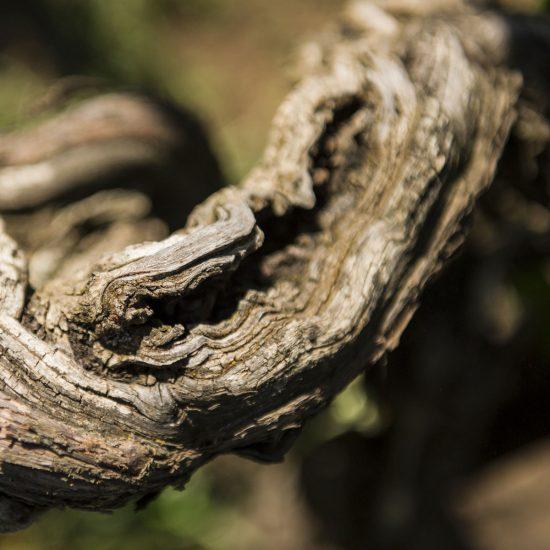 luoghi-del-vino_2