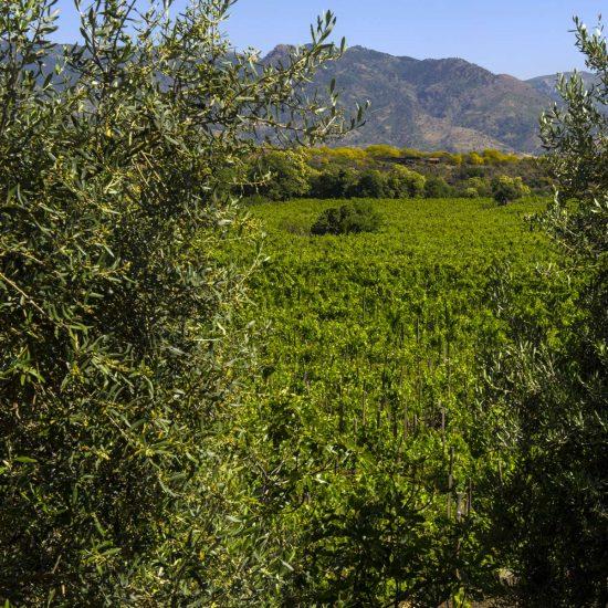 new-2-luoghi-del-vino_11