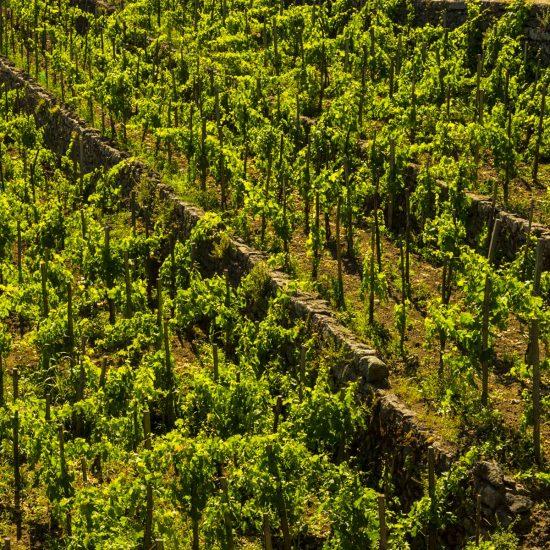 new-2-luoghi-del-vino_12