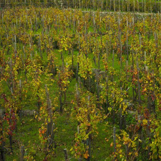 new-2-luoghi-del-vino_4