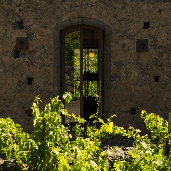 new-luoghi-del-vino_7